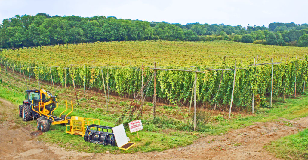 Puttenham Farm hop garden, Seale, near Farnham, Surrey